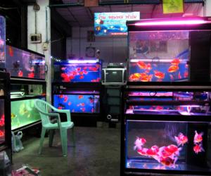 fish, animals, and aquarium image