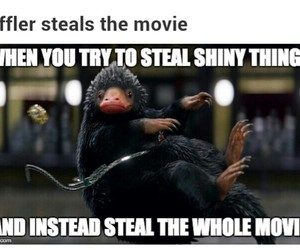 steal, shiny things, and fantastic beasts image