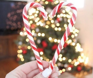 candy cane and winter image