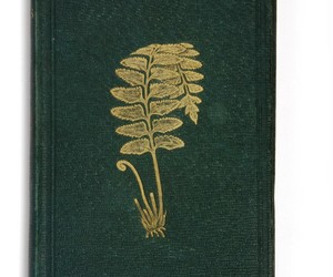 book cover, book in the gold ferns, and ferny combes image