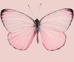 awesome, butterfly, and beauty image