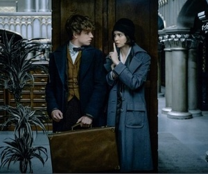 newt scamander, fantastic beasts, and harry potter image