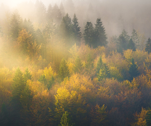 forest, landscape, and places image