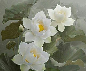beauty, flowers, and lotus image