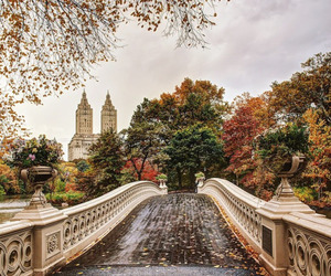 autumn, fall, and bridge image