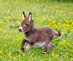 donkey, cute, and baby image