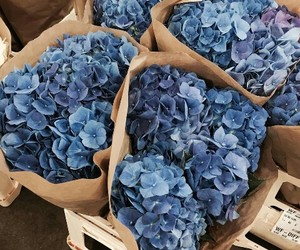 bouquet, flowers, and blue image