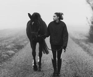 girl, horses, and pferd image