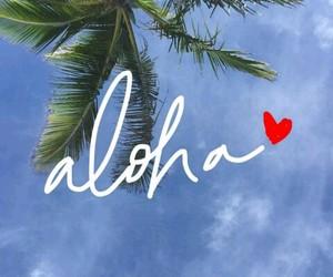 Aloha and palm tree image
