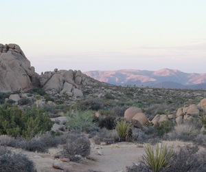 ca, california, and desert image