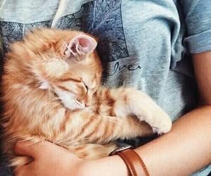 Animales, gato, and durmiendo image
