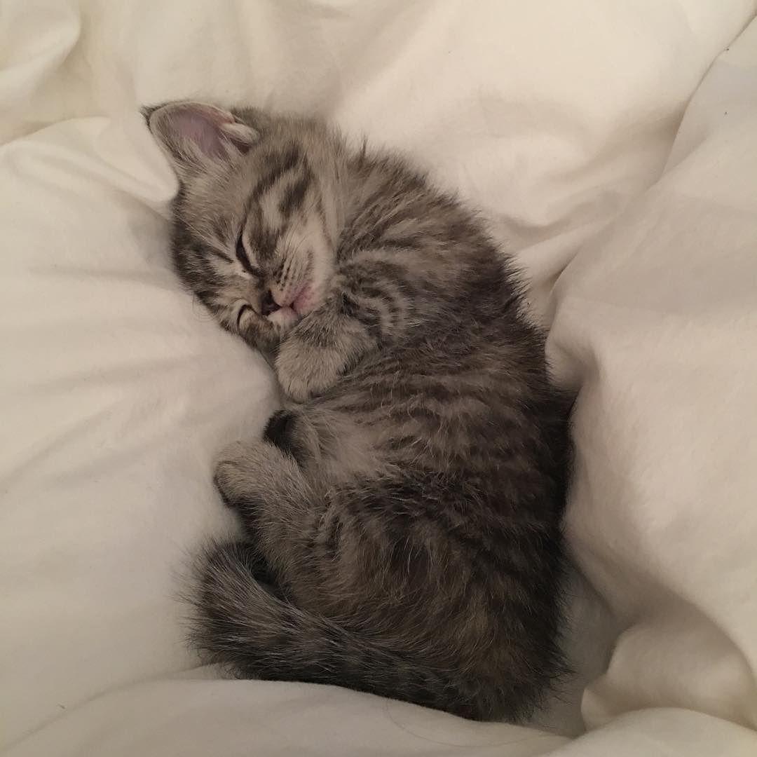 Фото котик спит сладко