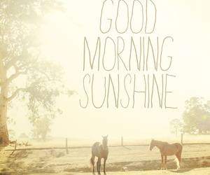 sunshine, good, and horses image