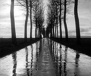 art, black and white, and trees image