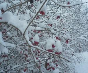 amazing, christmas, and cold image