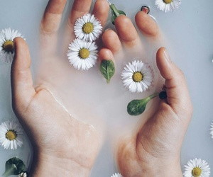 chamomile, flower, and hands image