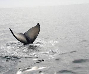mermaid, whale, and ocean image