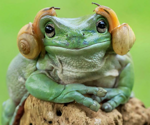 animal, frog, and snails image