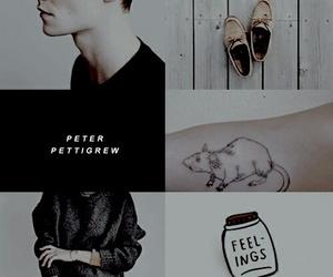 harry potter, rat, and peter pettigrew image