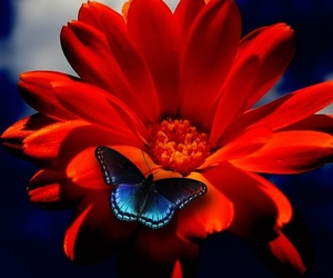 flowers and butterfly image