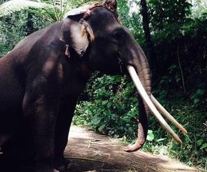 elephant, tropical, and animal image