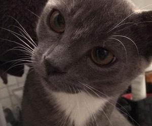 brown, grey, and cat image