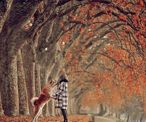 autumn, fall, and @earth.magic image