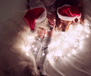 animals, cozy, and fairy lights image