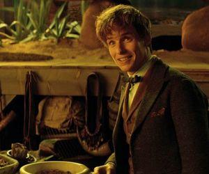 newt scamander, eddie redmayne, and harry potter image