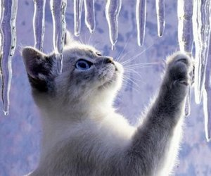 cat, winter, and kitten image