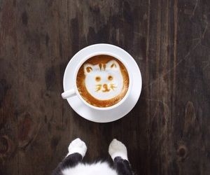 cafe, cat, and coffee image