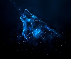 wolf, blue, and stars image