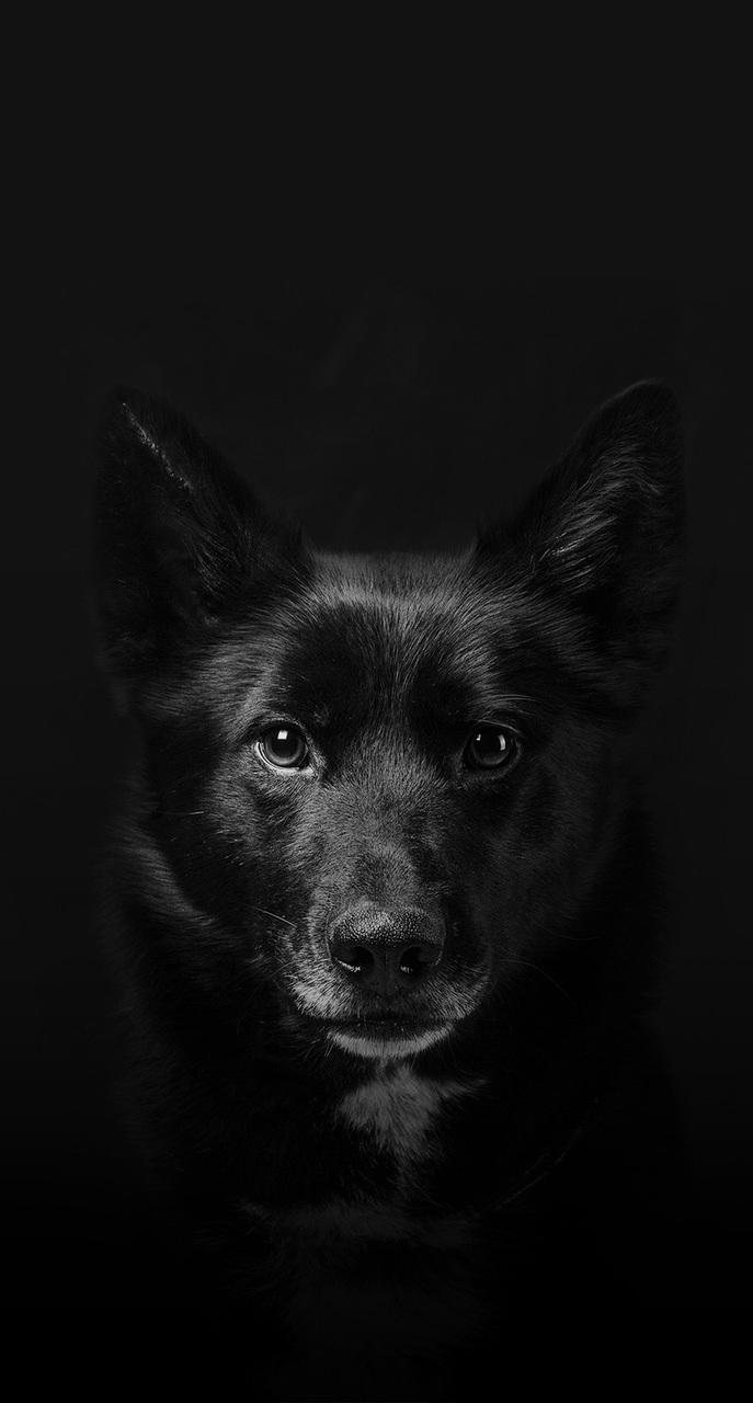 dog, harry potter, and sirius black image