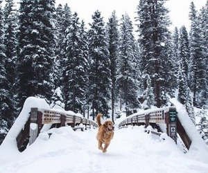 dog, winter, and snow image
