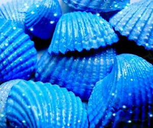 blue, glitter, and seashell image