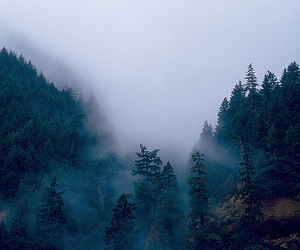 mountains, wood, and woods image