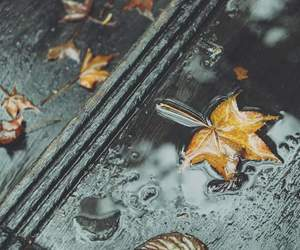 alone, leaves, and rain image