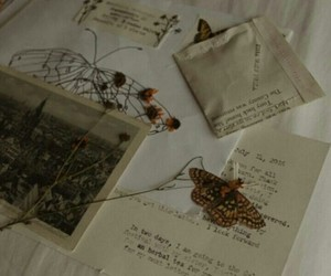butterfly, flower, and Paper image