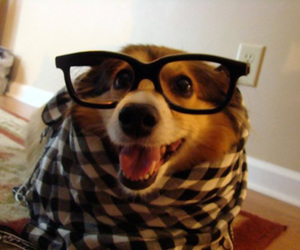 absurd, dog, and hipster image