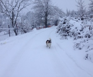 puppy, winter, and beautiful image