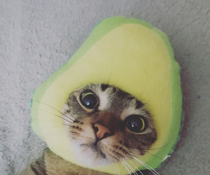 avocado, kitten, and cute image