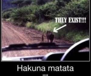 hakuna matata, funny, and lion king image