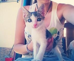 pet, cat, and kitten image