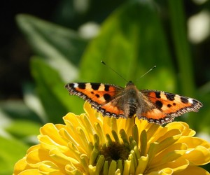 butterfly, my photos, and nature image