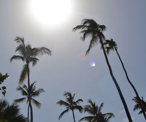 palm trees, pretty, and sky image