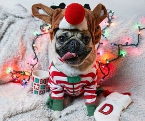 christmas, dog, and animal image