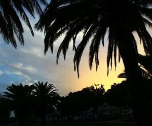 palmtree, naturally, and grancanaria image