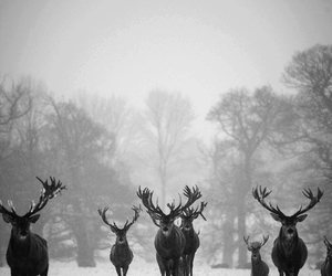 black and white, stag, and photography image