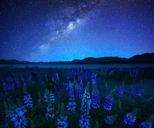 field, flowers, and night image