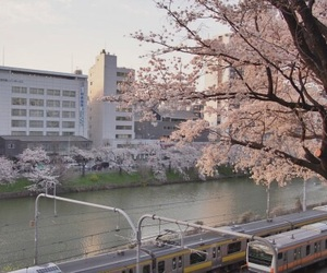 aesthetic, japan, and pink image